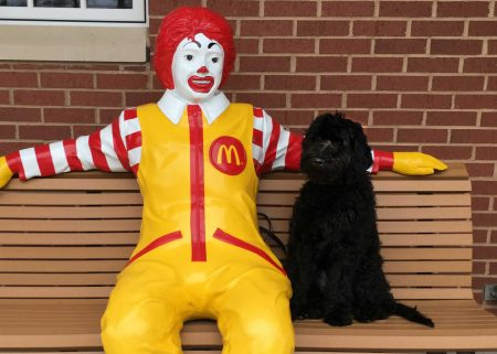 Black dog sitting on bench next to statue of Ronald McDonald